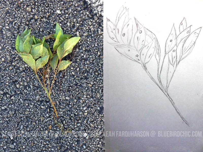 bluebirdchic_leaf_sketch