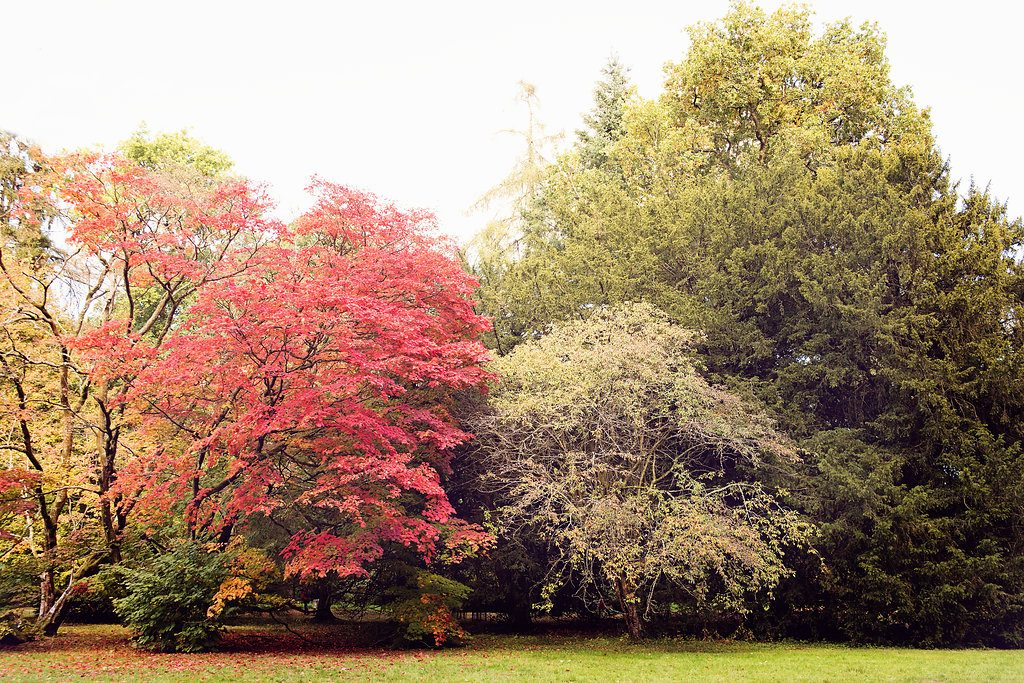 capturing photos of autumn changes and colors | anna bowkis | bluebird chic