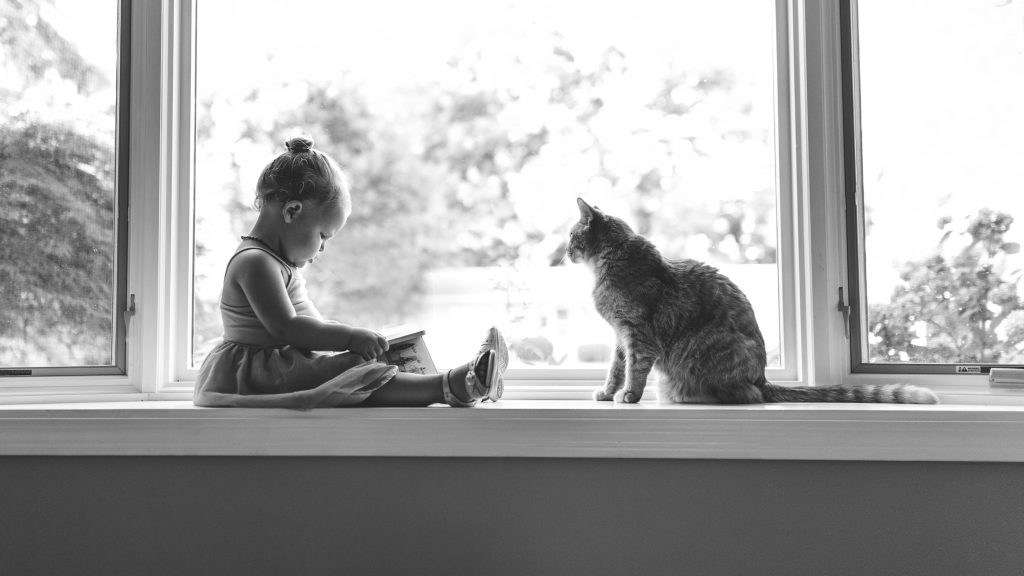 Photographing the Family Cat | Kim Hoover | Bluebird Chic