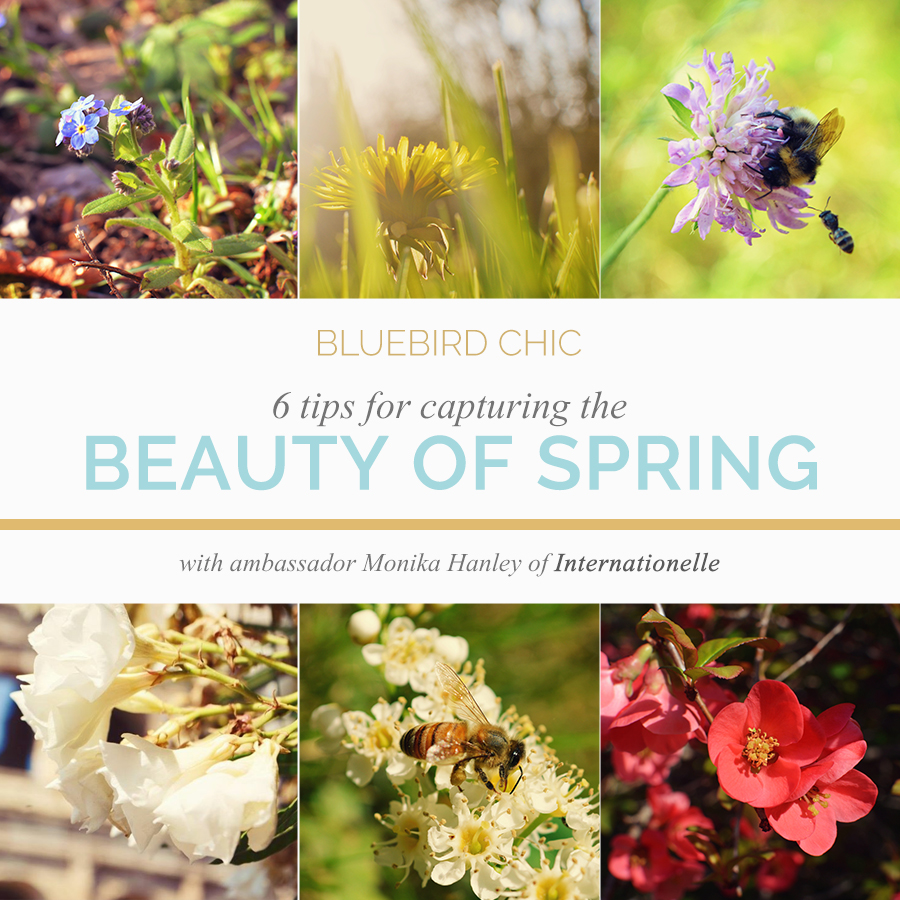 6 Tips for Capturing the Beauty of Spring in Your Photos | Monika Hanley | Bluebird Ambassador